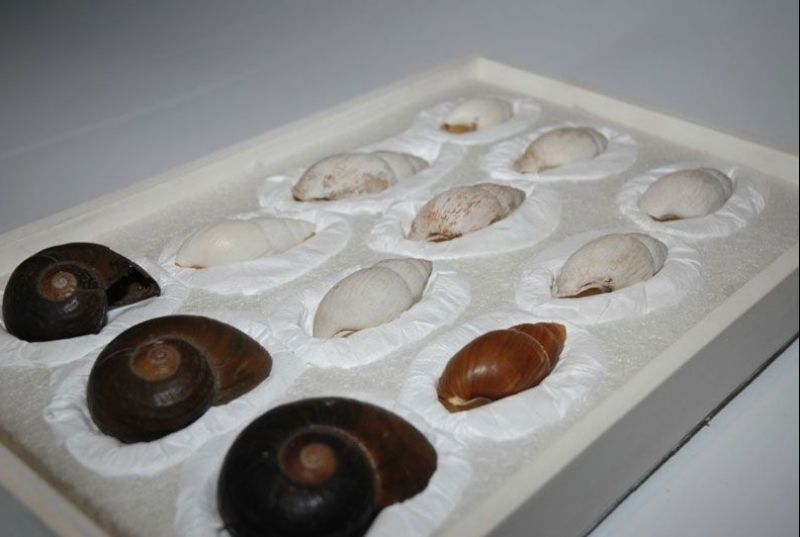 Museum_tray-of-shells.jpg